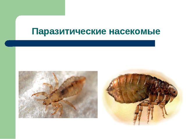 Паразитические насекомые