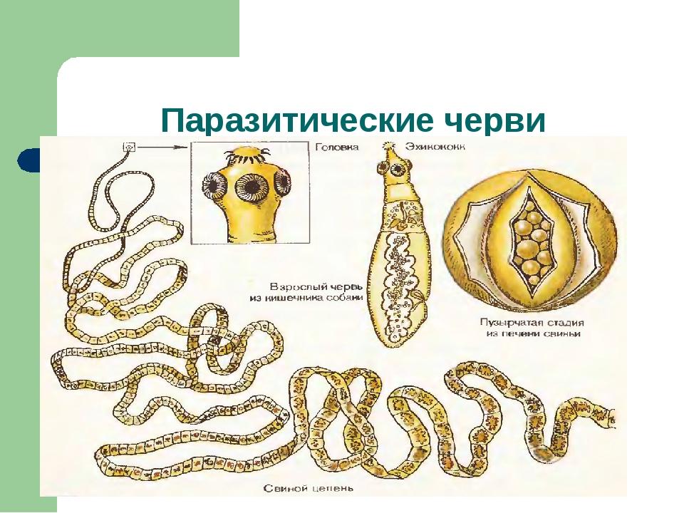 Паразитические черви