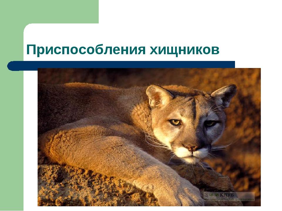 Приспособления хищников