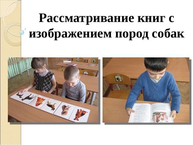 Рассматривание книг с изображением пород собак