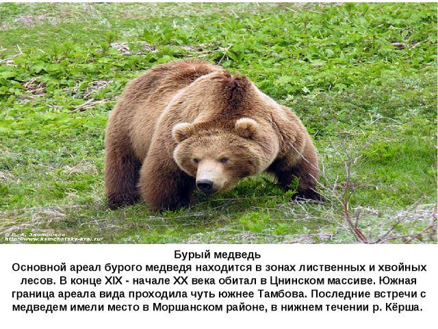 Бурый медведь Основной ареал бурого медведя находится в зонах лиственных и х...