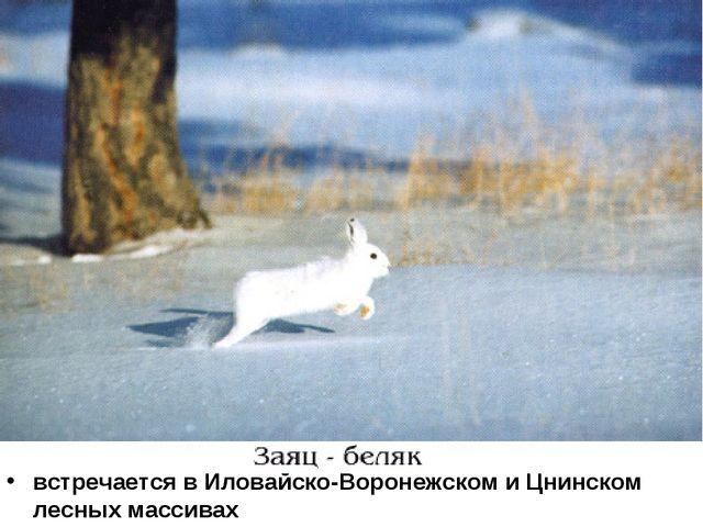 встречается в Иловайско-Воронежском и Цнинском лесных массивах