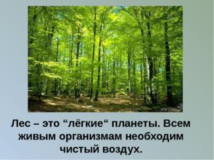 """Лес – это """"лёгкие"""" планеты. Всем живым организмам необходим чистый воздух."""