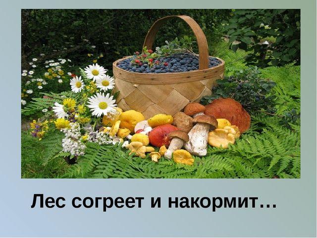 Лес согреет и накормит…
