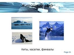 Животный мир Киты, касатки, финвалы Page *