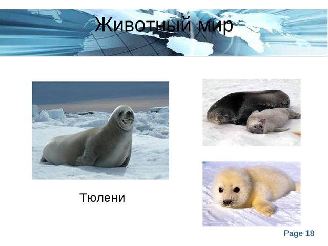 Животный мир Тюлени Page *