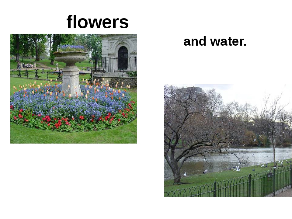 flowers and water.