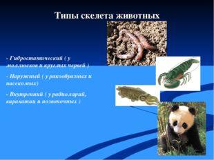 - Гидростатический ( у моллюсков и круглых червей ) - Наружный ( у ракообраз