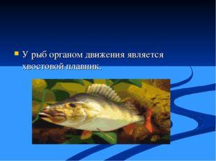 У рыб органом движения является хвостовой плавник.