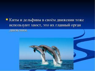 Киты и дельфины в своём движении тоже используют хвост, это их главный орган