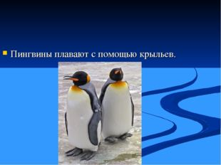 Пингвины плавают с помощью крыльев.