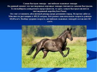 Самая быстрая лошадь - английские скаковые лошади На данный момент эти чисток