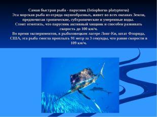 Самая быстрая рыба - парусник (Istiophorus platypterus) Эта морская рыба из о
