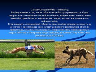 Самая быстрая собака - грейхаунд Вообще мнения о том, какая собака самая быст