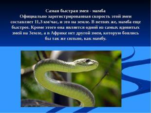 Самая быстрая змея - мамба Официально зарегистрированная скорость этой змеи с