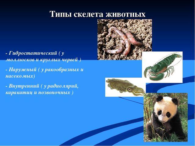 - Гидростатический ( у моллюсков и круглых червей ) - Наружный ( у ракообраз...