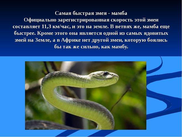 Самая быстрая змея - мамба Официально зарегистрированная скорость этой змеи с...