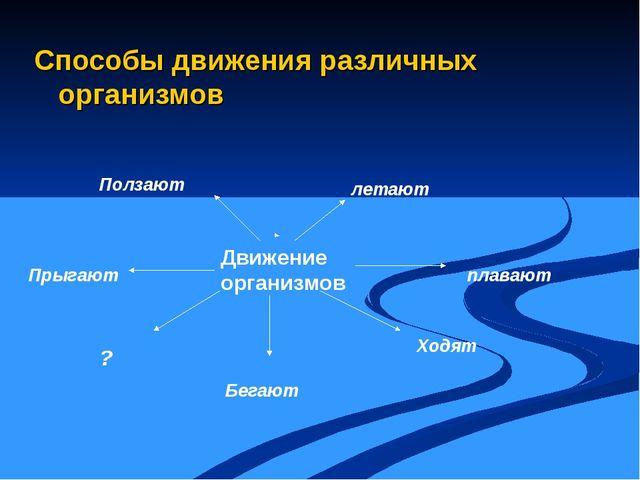 Способы движения различных организмов Движение организмов летают плавают Ходя...