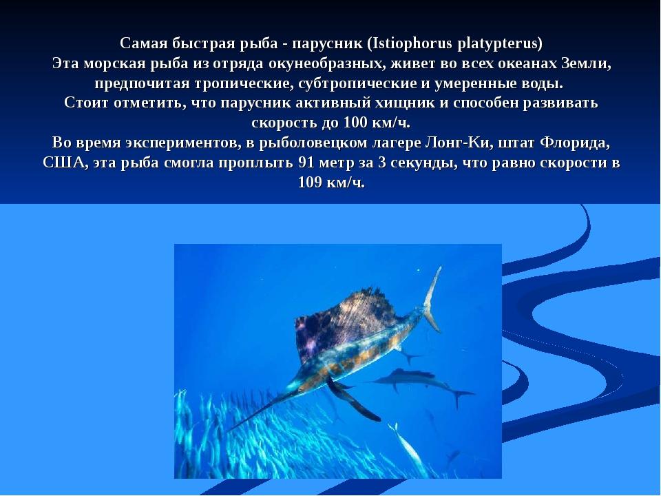 Самая быстрая рыба - парусник (Istiophorus platypterus) Эта морская рыба из о...