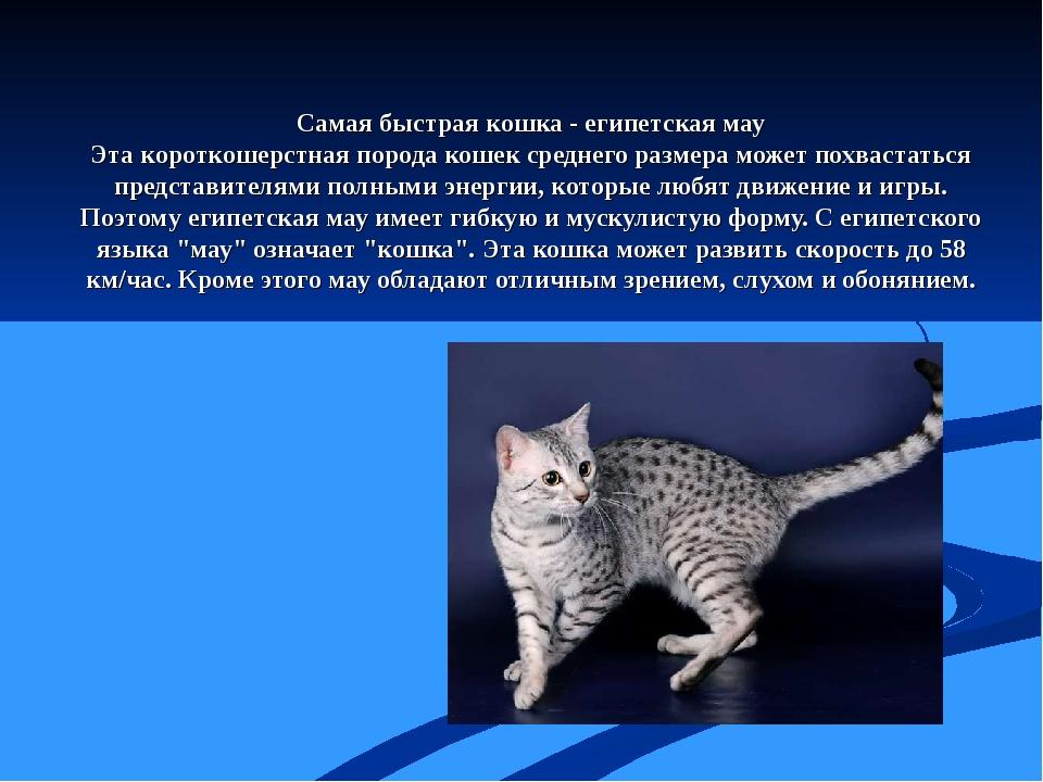 Самая быстрая кошка - египетская мау Эта короткошерстная порода кошек среднег...