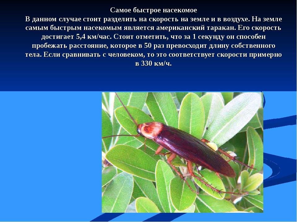 Самое быстрое насекомое В данном случае стоит разделить на скорость на земле...