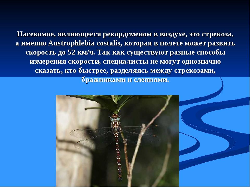 Насекомое, являющееся рекордсменом в воздухе, это стрекоза, а именно Austroph...