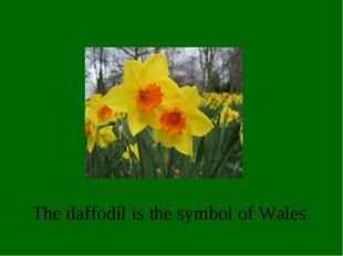 The daffodil is the symbol of Wales.