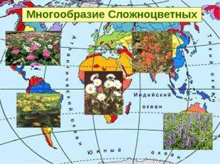 Многообразие Сложноцветных