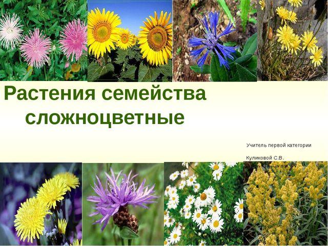 Растения семейства сложноцветные Учитель первой категории Куликовой С.В. «МБК...
