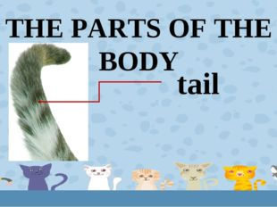 THE PARTS OF THE BODY tail