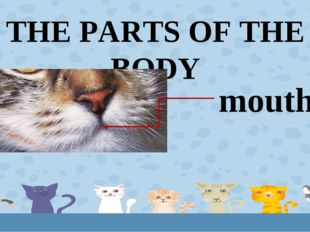 THE PARTS OF THE BODY mouth