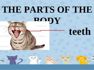 THE PARTS OF THE BODY teeth