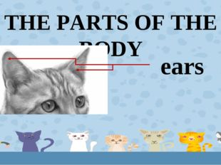 THE PARTS OF THE BODY ears