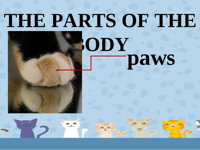 THE PARTS OF THE BODY paws