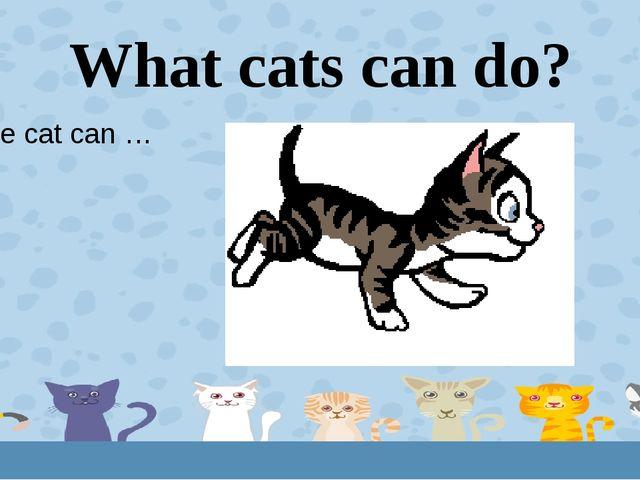 What cats can do? The cat can … 1