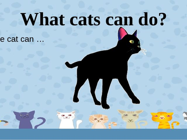 What cats can do? The cat can … 4