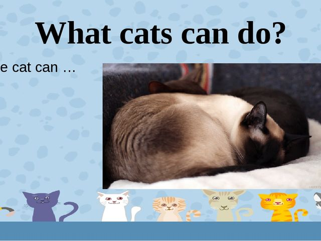 What cats can do? The cat can … 5