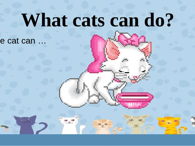 What cats can do? The cat can … 6