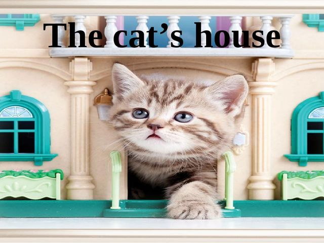 The cat's house