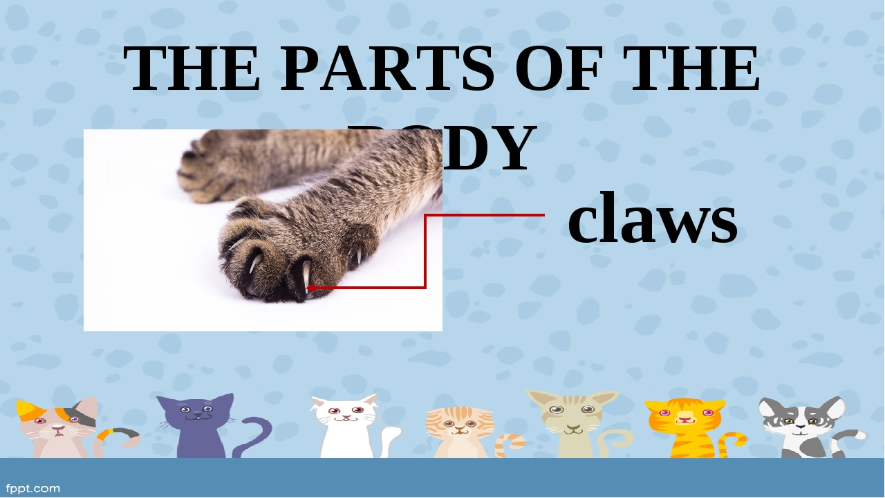 THE PARTS OF THE BODY claws