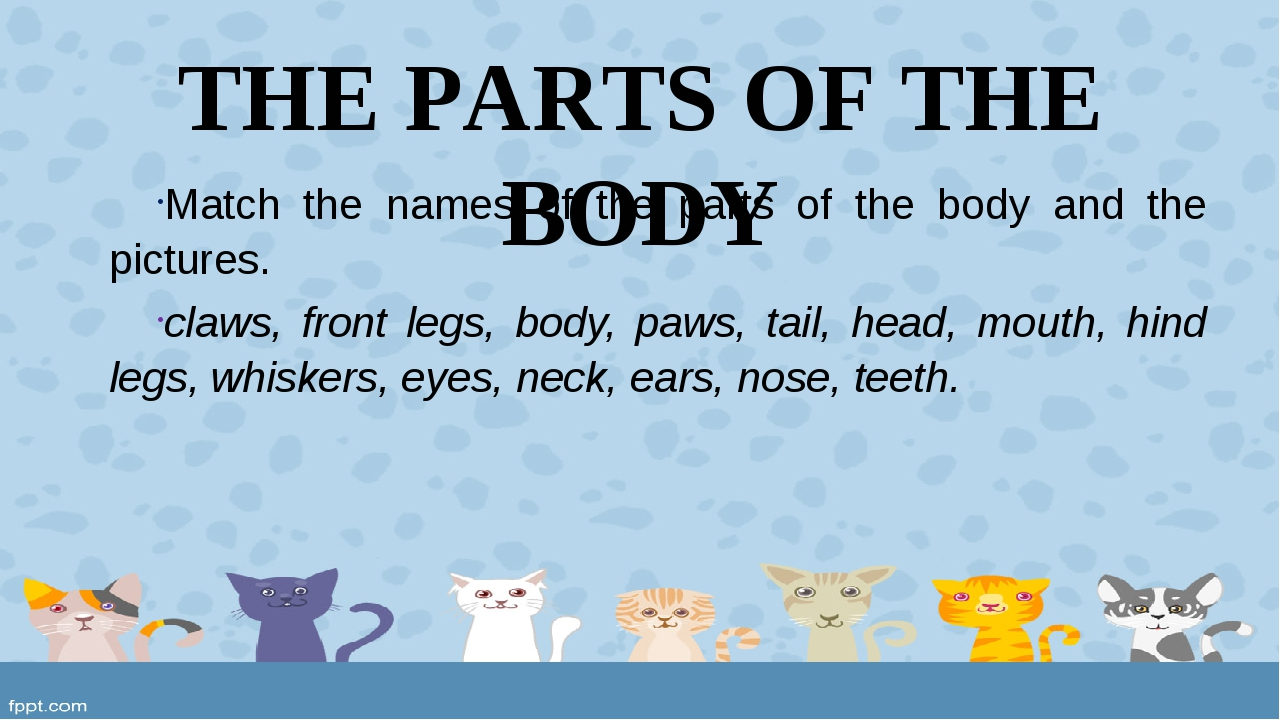 THE PARTS OF THE BODY Match the names of the parts of the body and the pictur...