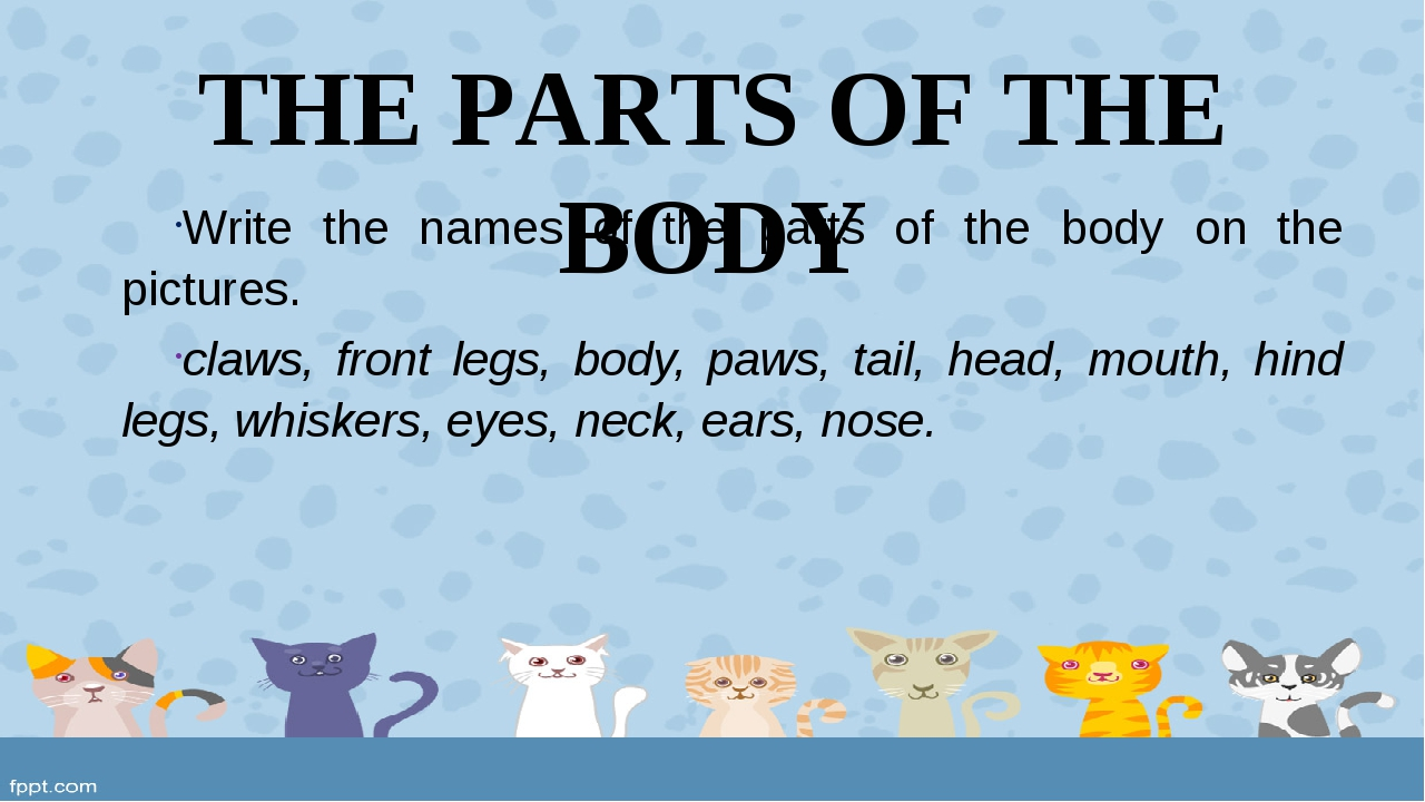 THE PARTS OF THE BODY Write the names of the parts of the body on the picture...