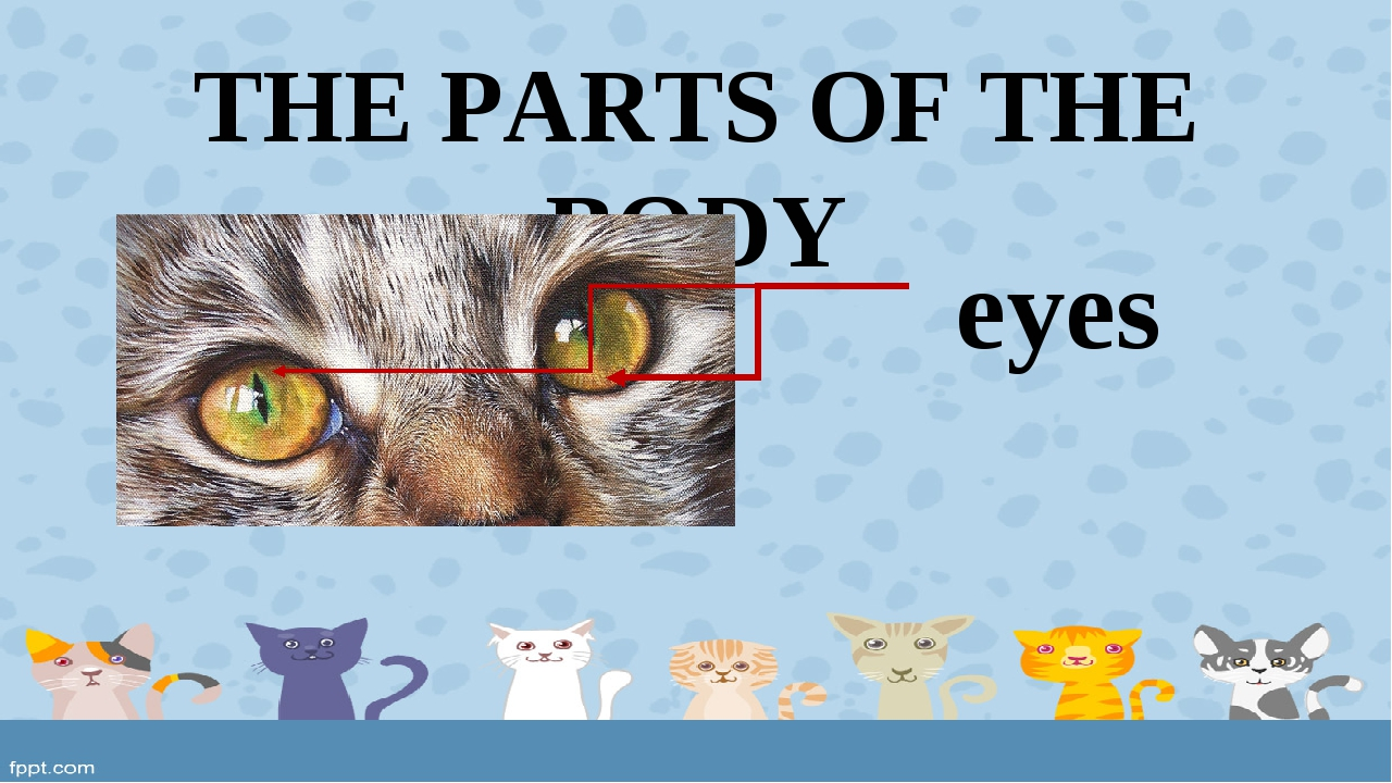THE PARTS OF THE BODY eyes