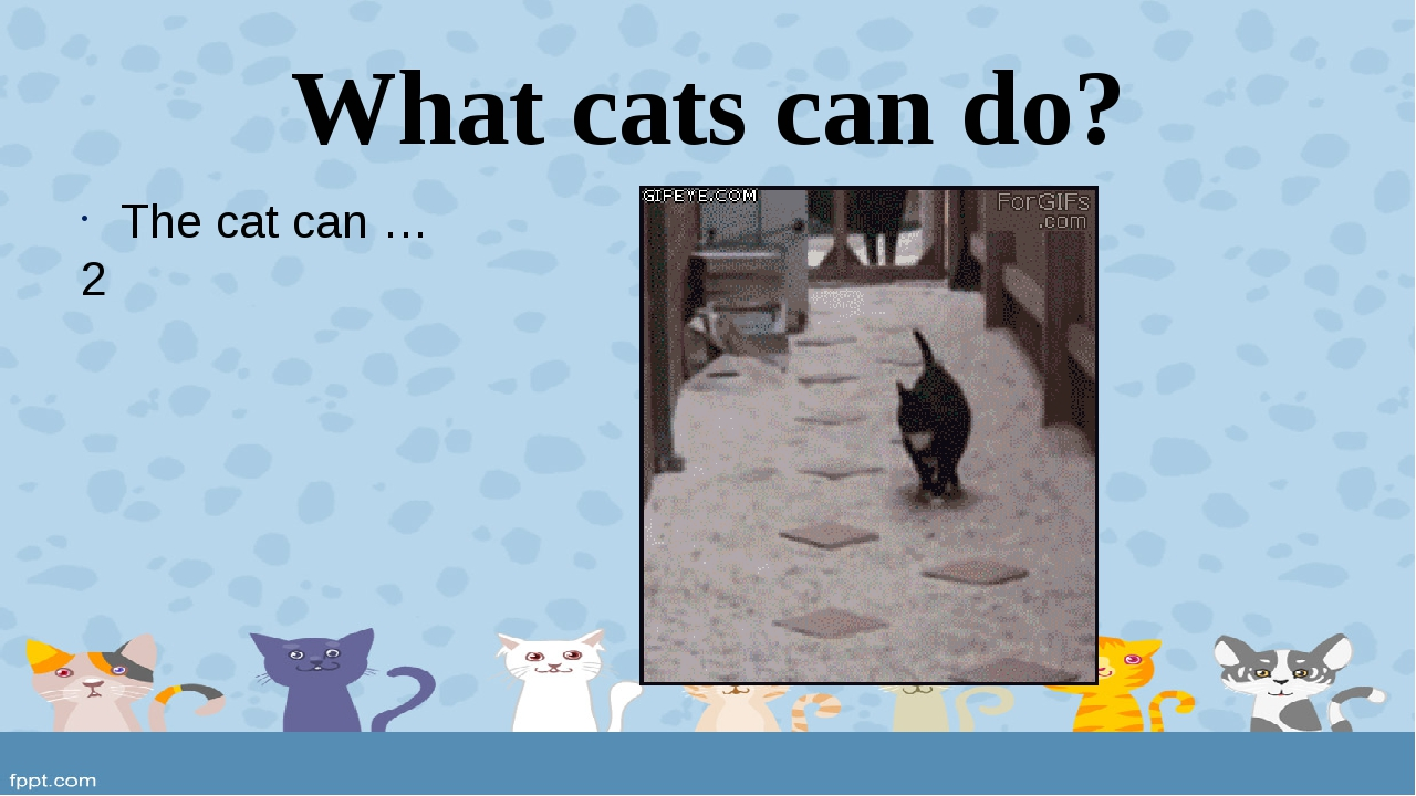 What cats can do? The cat can … 2