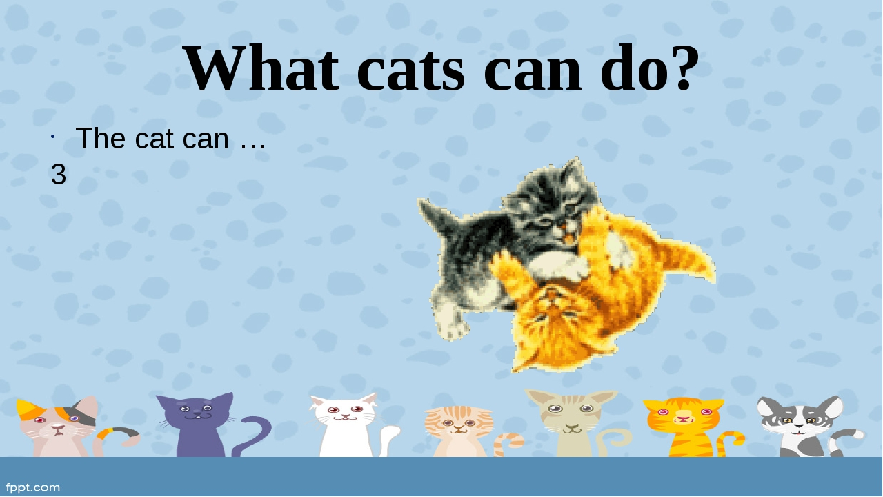 What cats can do? The cat can … 3
