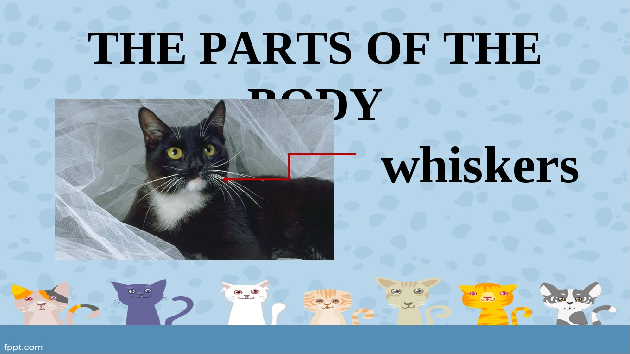 THE PARTS OF THE BODY whiskers