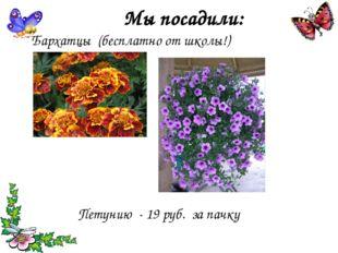 Мы посадили: Бархатцы (бесплатно от школы!) Петунию - 19 руб. за пачку