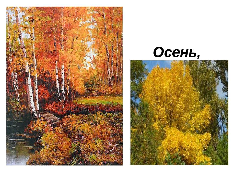 Осень, ясень, осенний цвет…