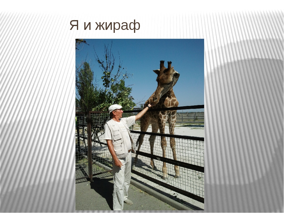Я и жираф
