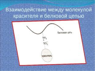 Взаимодействие между молекулой красителя и белковой цепью